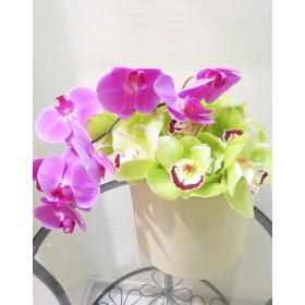 Коробка с орхидеями №37