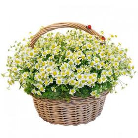 Корзина цветов №292