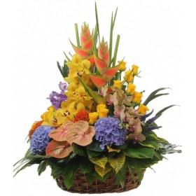 Корзина с орхидеями и гортензией